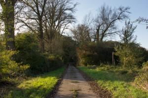 Kühkopf, Weg zur Fähre